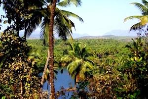 Galgibaga-dżungla-1024x685 [MINIATURY]
