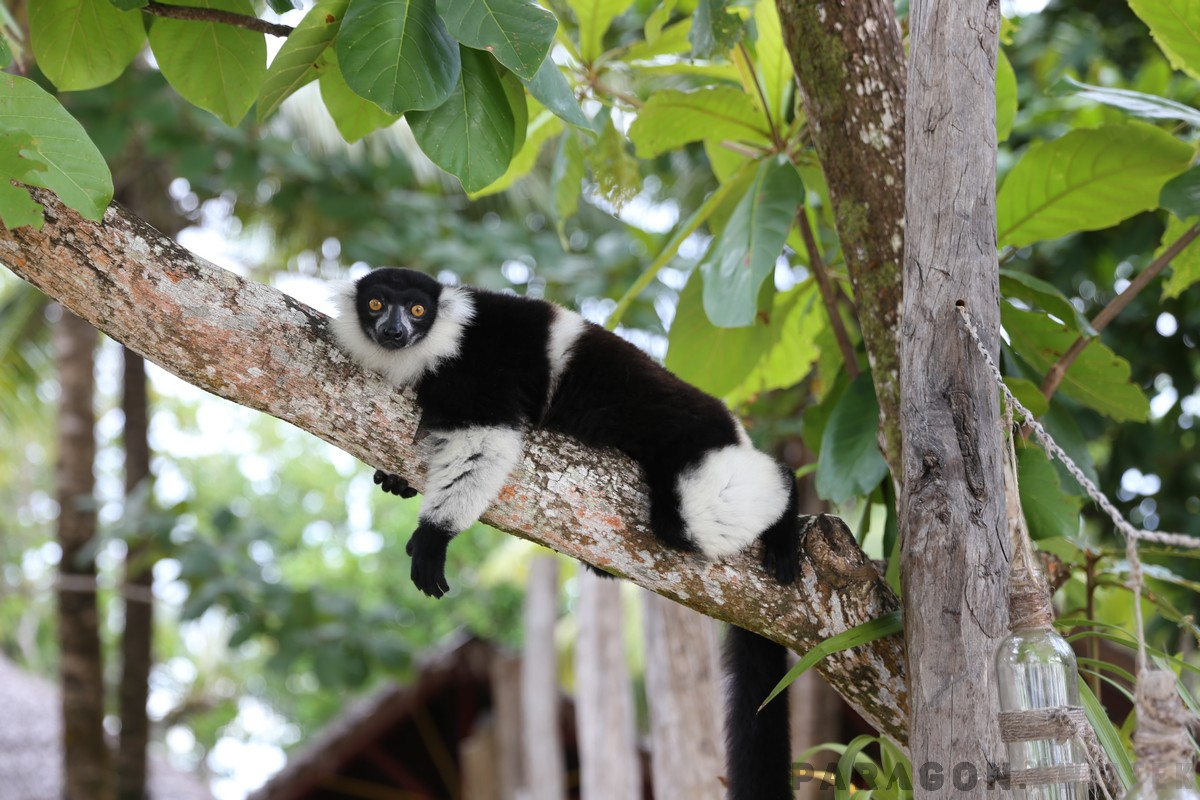 Kierunek Madagaskar!