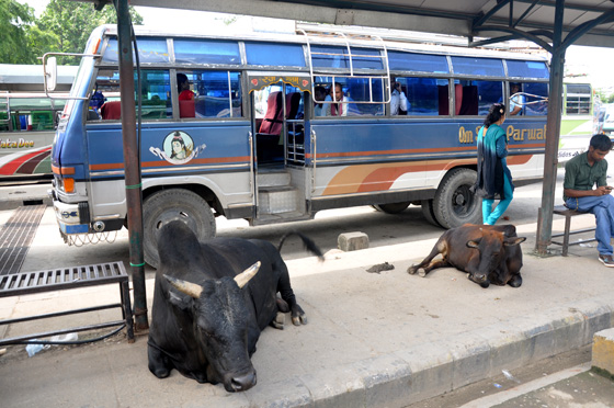 transport nepal