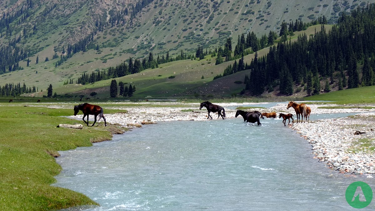 horses kyrgyzstan