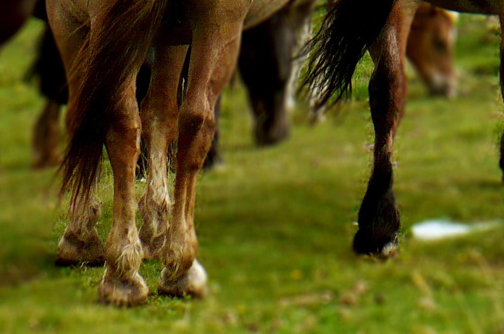 konie-blur-1024