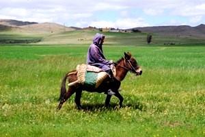 marokanczyk-na-osle [MINIATURY]