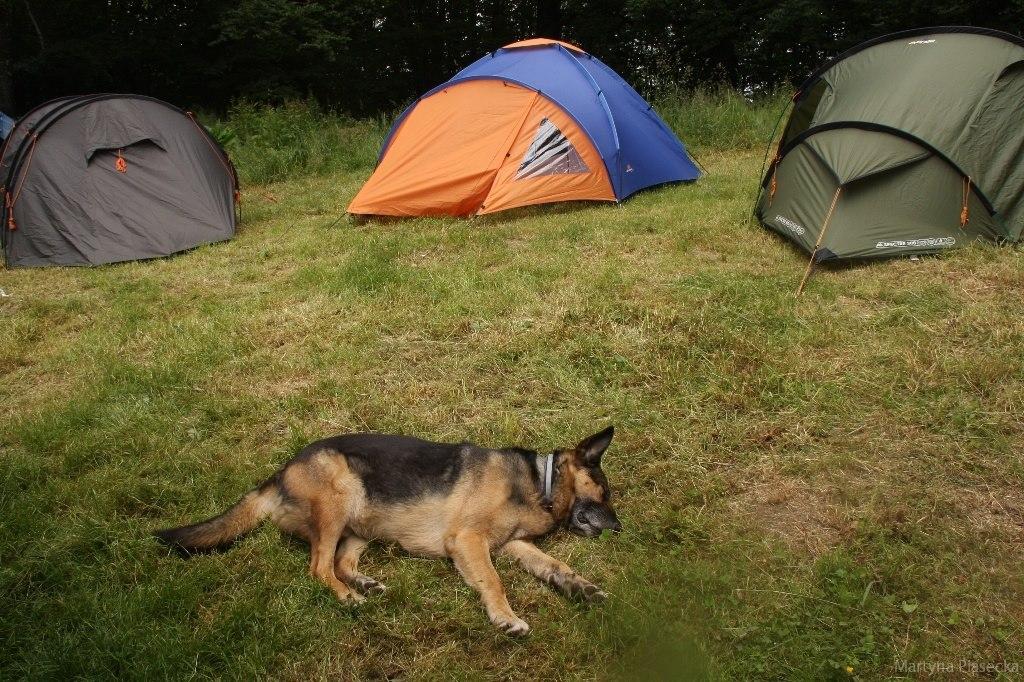 ... namiotowicze natomiast liczyć mogli na inne atuty. Warowny pies strzegł pilnie ich pałatek przed leśnymi biesami.