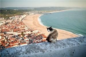 portugalia wybrzezem