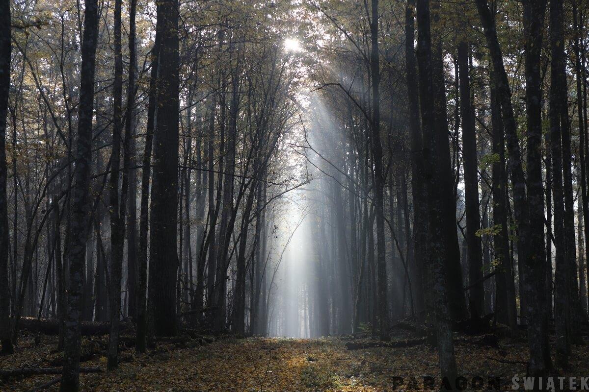 Babie Lato w Puszczy Białowieskiej
