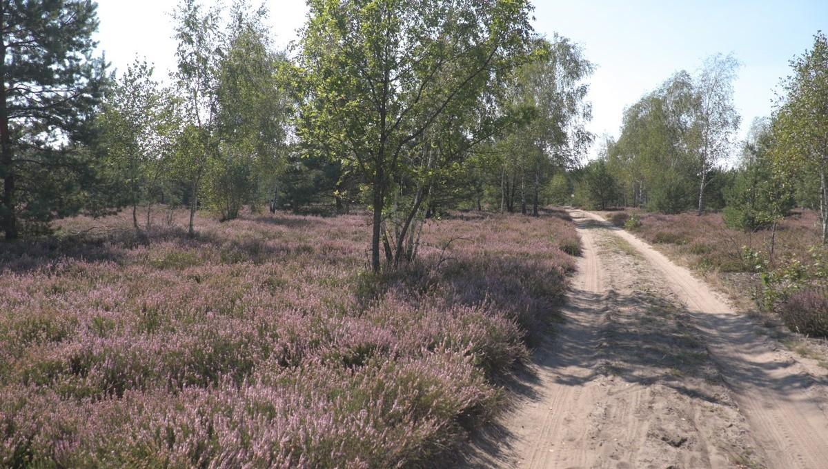 Pole Wrzosow