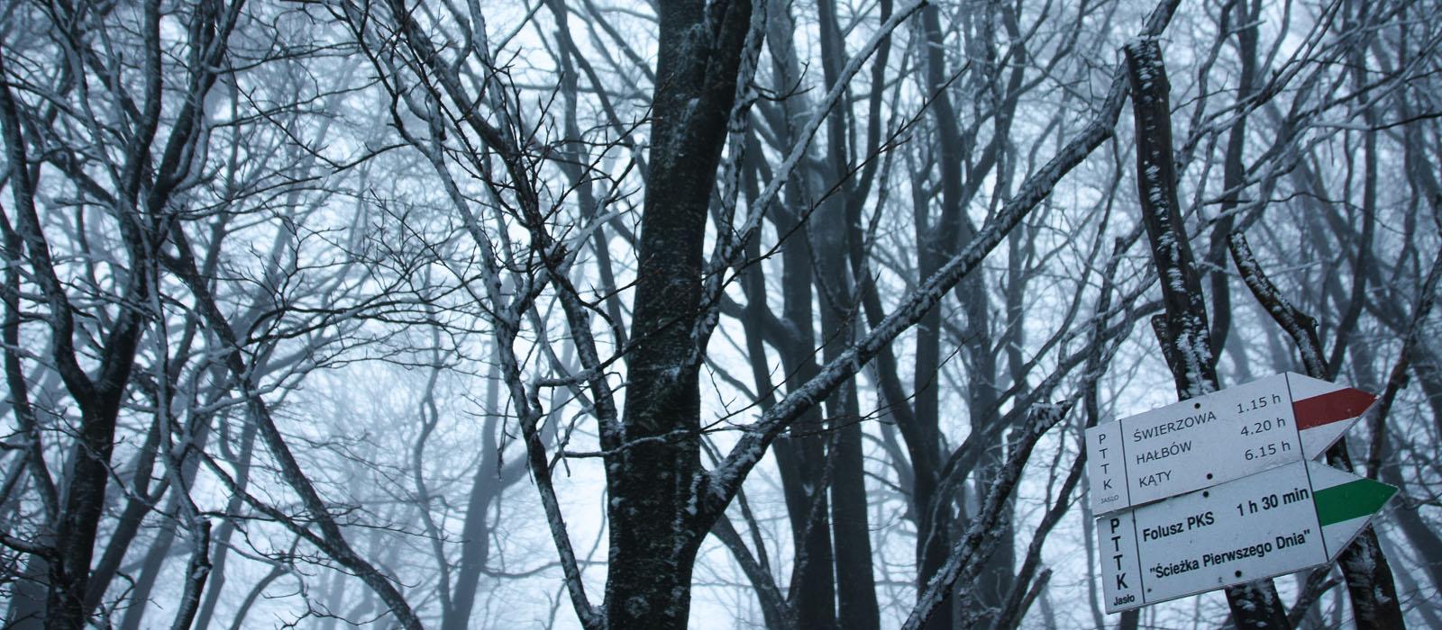 7 uroczych szlaków Beskidu Niskiego na dobry początek