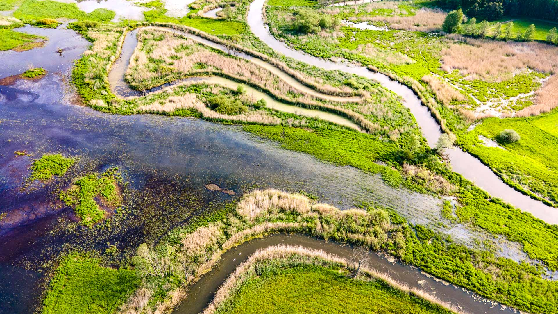 Rzeka Drwęca ≋ jednodniowy spływ kajakowy, trasa, relacja ≋
