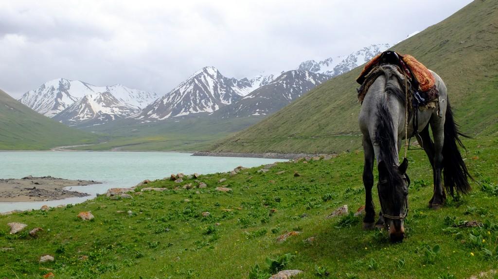 Jak okiełznać konia w Kirgistanie i nie wyciągnąć kopyt? Ile to kosztuje?