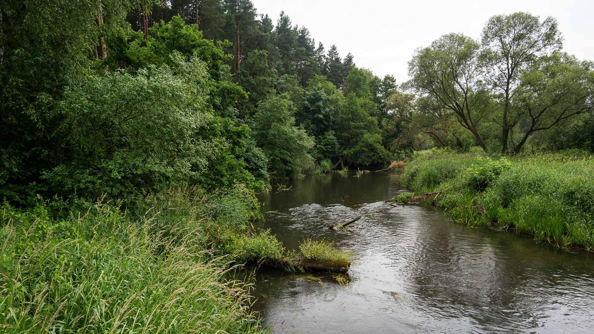 Rzeka Liswarta ≋ jednodniowy spływ kajakowy, trasa, relacja ≋