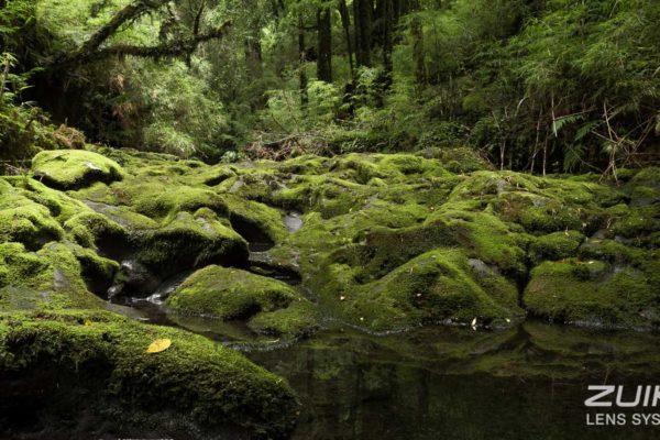 park narodowy puyehue