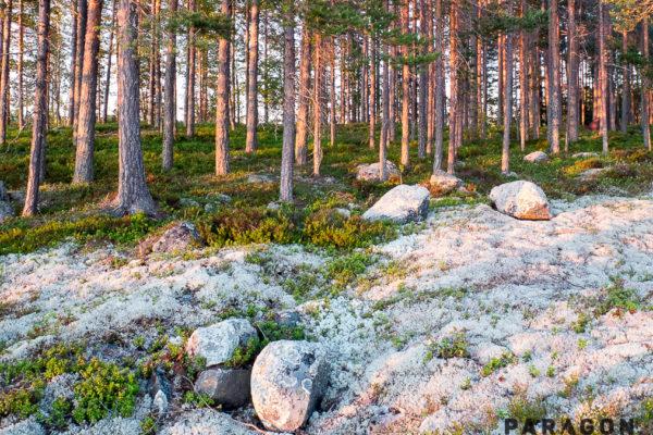 porosty finland