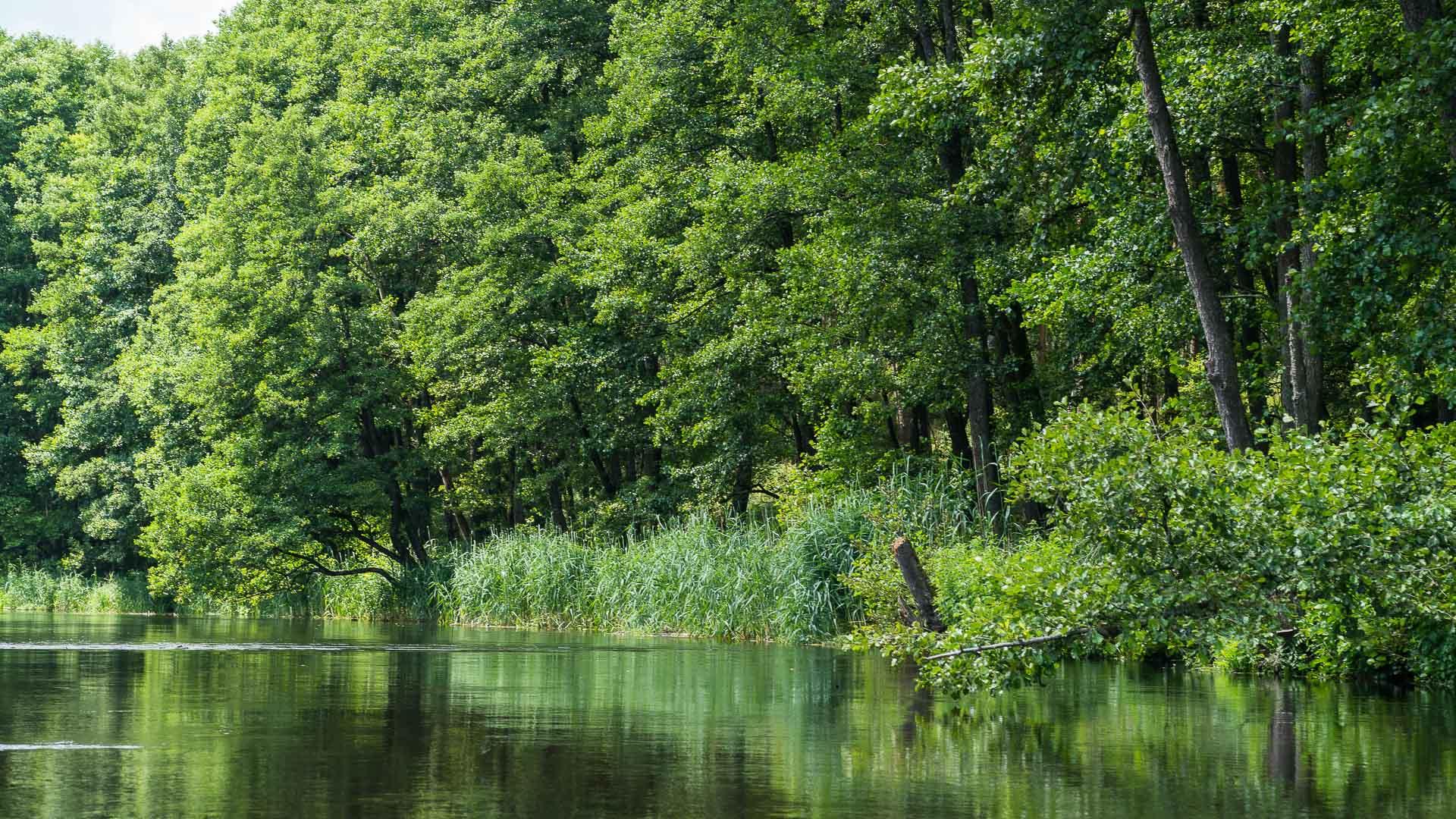 Rzeka Wda ≋ jednodniowy spływ kajakowy, trasa, relacja ≋