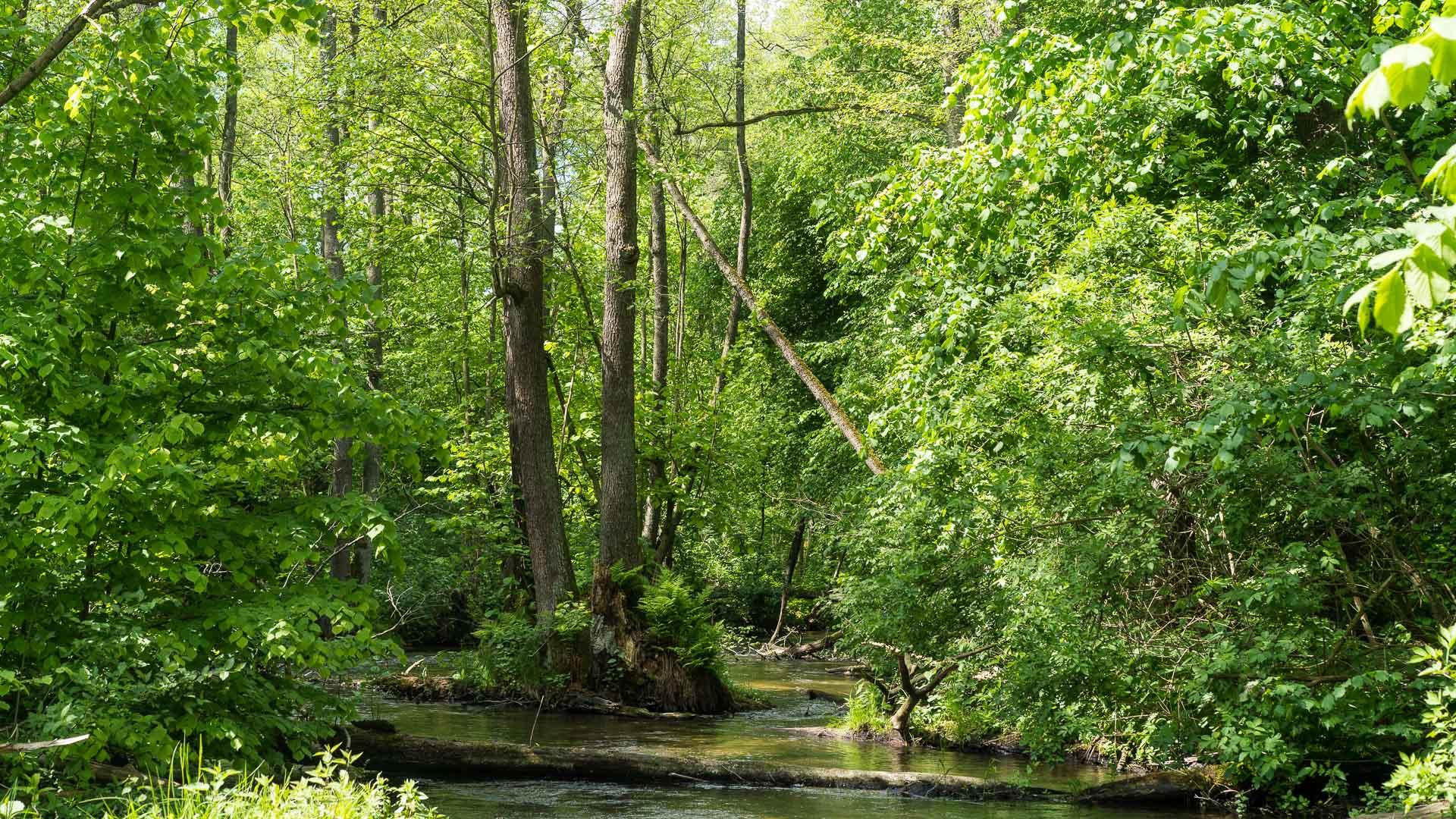 Rzeka Wel ≋ jednodniowy spływ kajakowy, trasa, relacja ≋